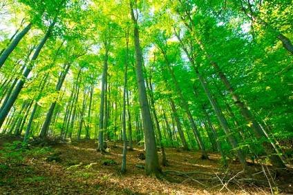 Blick in einen Laubwald