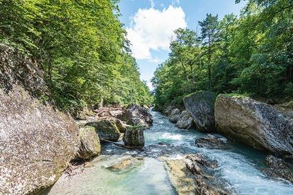 Fluss im Wald im Erlauftal