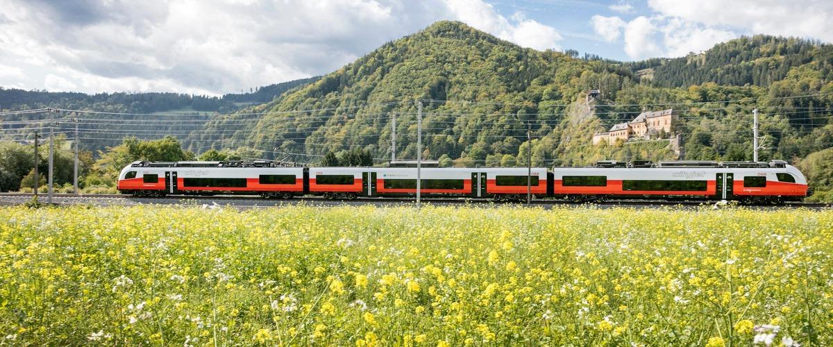 Zug in Landschaft, Blumenwiese