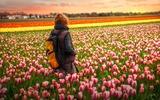 La donna in un campo di tulipani