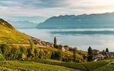 Weinberge bei Montreux