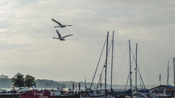 Vögel über Booten