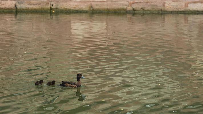 Enten am Wasser