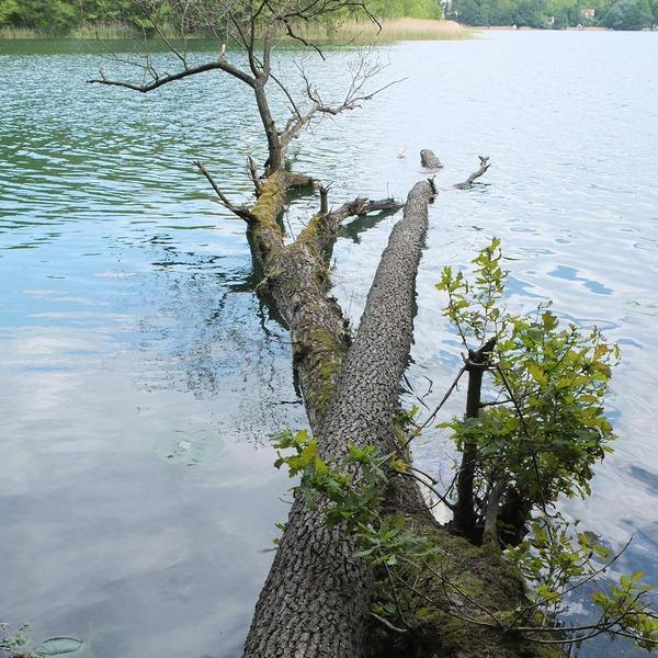 Ein umgeknickter Baum liegt in einem See