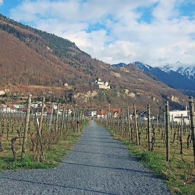 Weingarten in Vaduz
