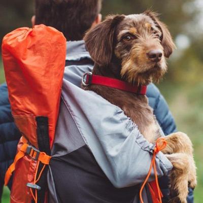 Ein Hund wird im Rucksack transportiert