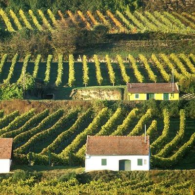 Kleine Häuser neben unzähligen Weinreben