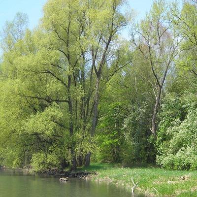 Schöner Uferbereich beim Rheindelta