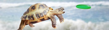 Schlidkröte fängt Frisbee