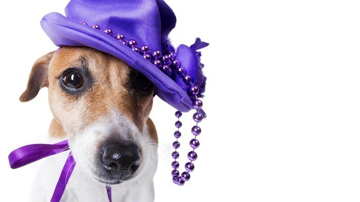 bahnfahrt-mit-hund