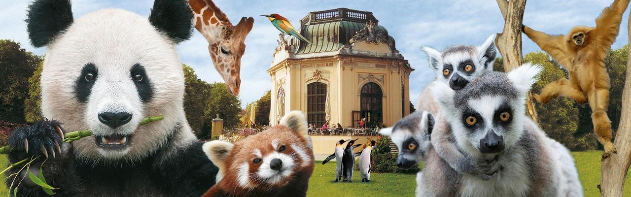 Tierkollage im Tiergarten Schönbrunn in Wien