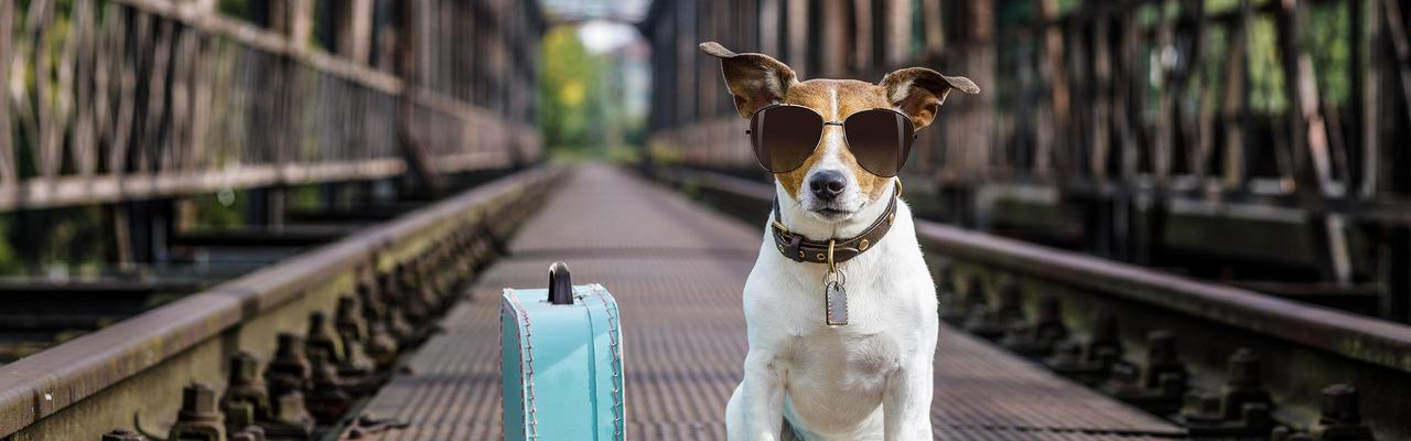 Cooler Hund mit Sonnebrille sitzt mit Reisekoffer am Gleis