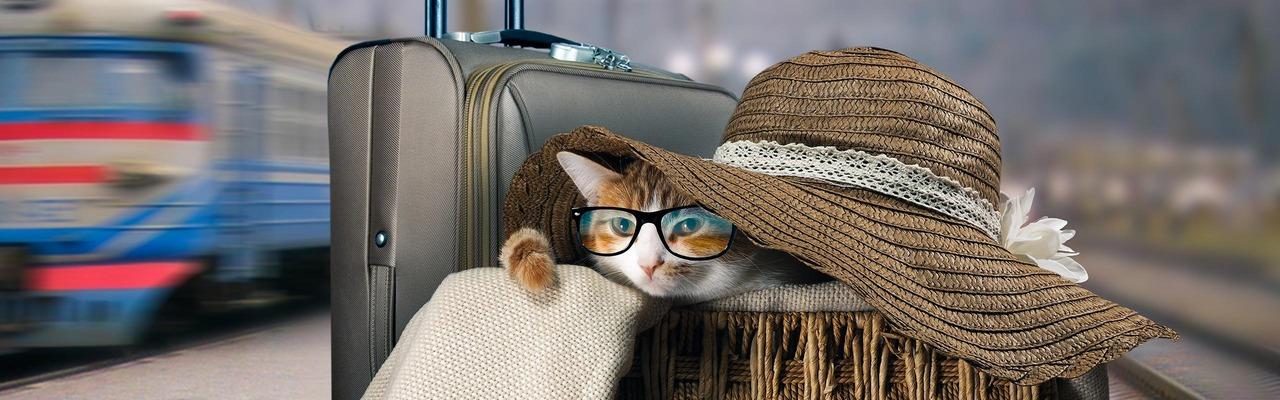 Eine Katze im Korb am Bahnsteig