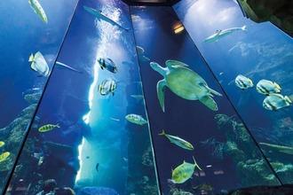 Aquarium im Haus des Meeres in Wien