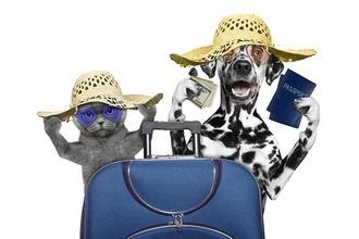 Witziges Bild von Hund und Katze in Strohhüten mit Reiseutensilien